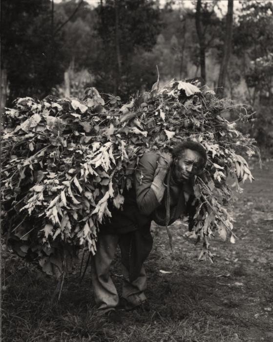 bush man
